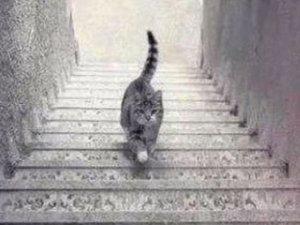 Kedi çıkıyor mu yoksa iniyor mu?