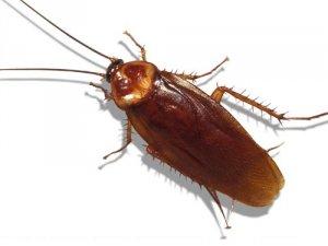 Hamam Böceği Robot'lar dikkat çekecek!
