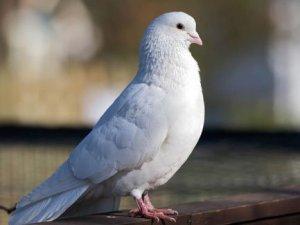 Talih Kuşu'nun kafası karıştı