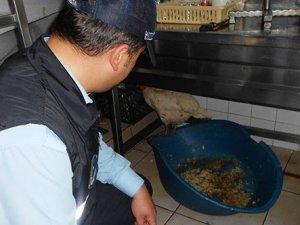 Lokanta mutfağında canlı tavuk bulundu