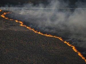 Ukrayna'daki orman yangını kontrol altına alındı