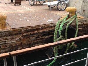 Ada vapurunda korkulan anlar: Koç boynuzu koptu