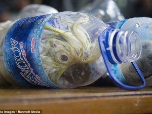 Papağanlara plastik su şişeleriyle eziyet!