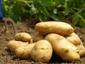 Kilosu 5 lira olan patatese İran ayarı