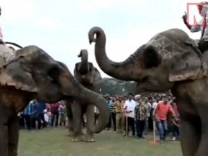 Hindistan'da fillere işkence