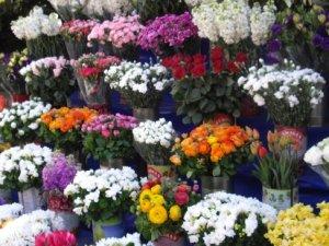 Anneler günü için 36 ülkeye 5 milyon dolarlık çiçek ihraç edildi