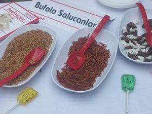 Kadıköy'de 'özel soslu böcek' ikramı