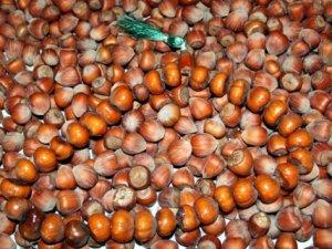 Fındık ihracatı mayısta yüzde 53 arttı
