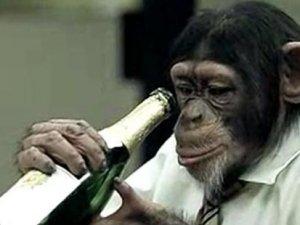 Şempanzeler de 'sosyal içici'ymiş