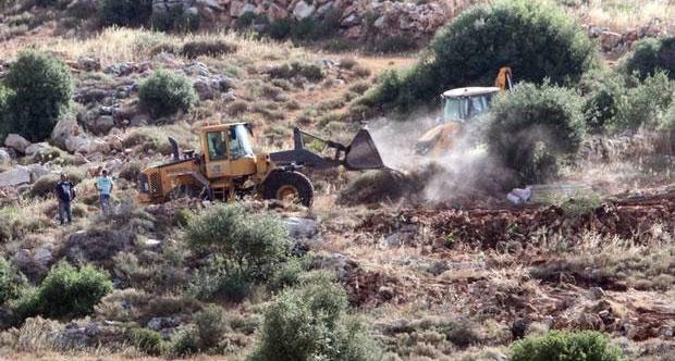 1000 ağaç yasa dışı gerekçesiyle yok edildi