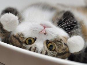 Kedi videosu izlemek neye sebep oluyor? dikkat!