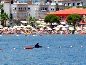 Marmaris'te köpekbalığı paniği
