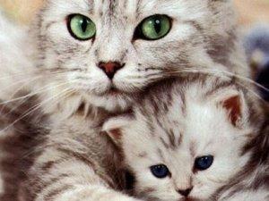 Annelerinden erken ayrılan kedilere ne oluyor?