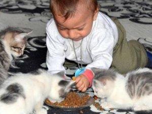 Çocuğa değil kediye yardım!