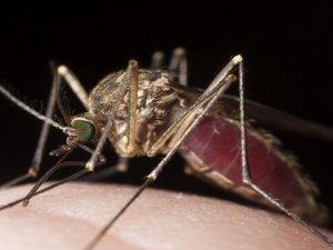 Sivrisinekler neden sizi hedef alıyor?