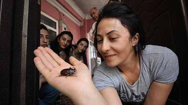 Evinden 90 bin dolarlık böcek çıktı!