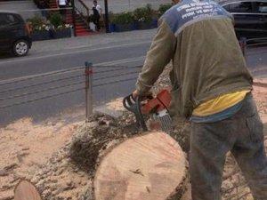 Emirgan'da ağaç kesimi tepkiye yol açtı