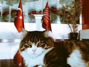 CHP'nin kedisi Şero'dan koalisyon yorumu