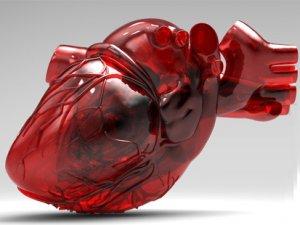 Kök hücreden kalp dokusu!