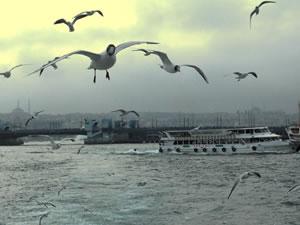 İstanbul'da kuş gribi sinyali