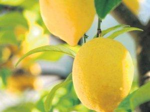 Limonu olan saklasın!