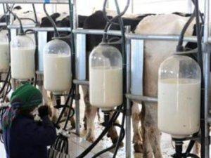 Süt sektöründe kriz korkusu!