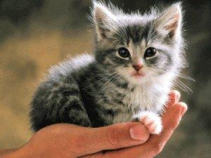 İspanya'da evcil hayvanlara hak tanındı