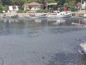 Kadıköy'de Kurbağalıdere eylemi
