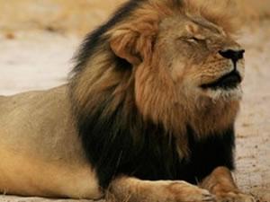 Aslan Cecil'in katili sır oldu