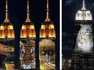 Nesli tükenmekte olan hayvanlar Empire State duvarında