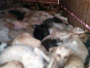 Köpek katliamı skandalı büyüyor!