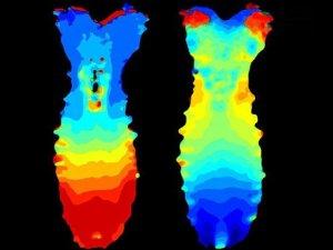 Sinir sistemi ilk kez görüntülendi
