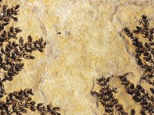 Dünyanın ilk bitkisi bulundu mu?
