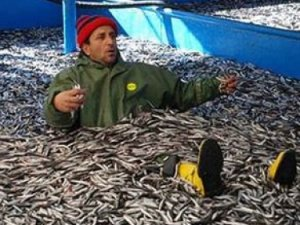 Balık sezonu açıldı