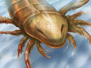 Örümceklerin atası: Deniz akrebi!