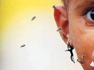 Dünyanın yeni virüsü: Dang humması