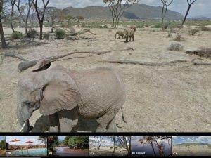 Google ile filler arasında gezin