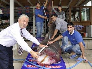 Dev köpek balığı kanser hastalarına şifa olacak