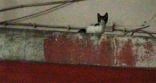 Mahsur kalan kedi 1 haftadır kurtarılamadı
