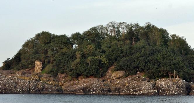 'Giresun Adası botanik bahçe olacak'