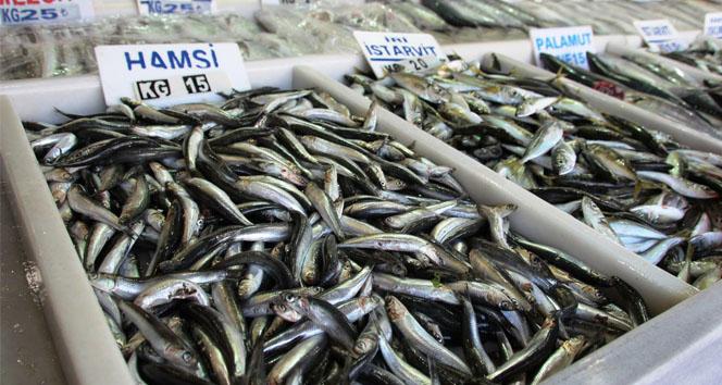 Balıkçıların umudu çinekop ve lüfer