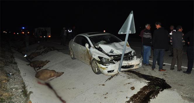 Otomobilin çarptığı 16 koyun öldü