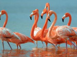 İzmir'de iki yılda 14 bin flamingo dünyaya geldi