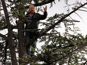 İş bulamayınca ağaca çıktı