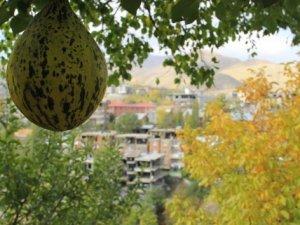 Hakkari'de sonbahar güzelliği