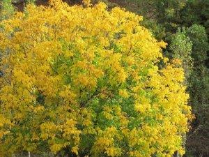 Van'da sonbahar güzelliği