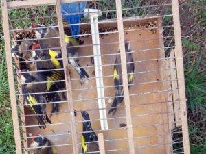 Şile'de saka kuşu operasyonu