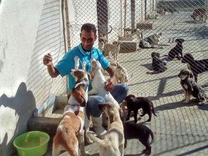 Tatil bitti barınaklar sahipsiz kalan hayvanlarla doldu