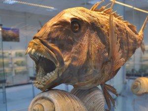 Denizde yaşayan canlıların müzesi