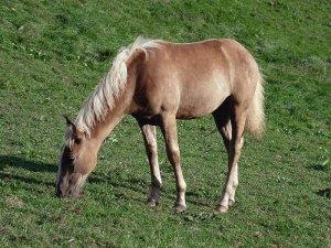 Bursa'da otlayan atı çaldılar